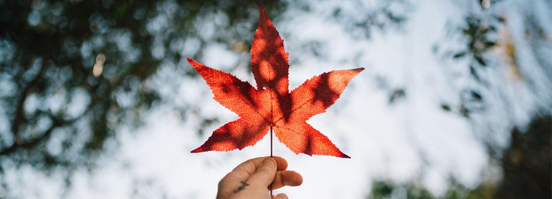 Đất nước và con người Canada đáng được cả thế giới ngưỡng mộ